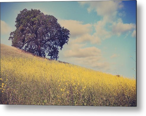 Mt. Diablo State Park Metal Print featuring the photograph Please Send Some Hope by Laurie Search