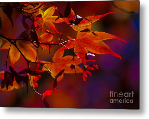 Leaves Metal Print featuring the photograph Royal Autumn A by Jennifer Apffel