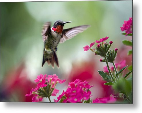 Hummingbird Metal Print featuring the photograph Ruby Garden Jewel by Christina Rollo