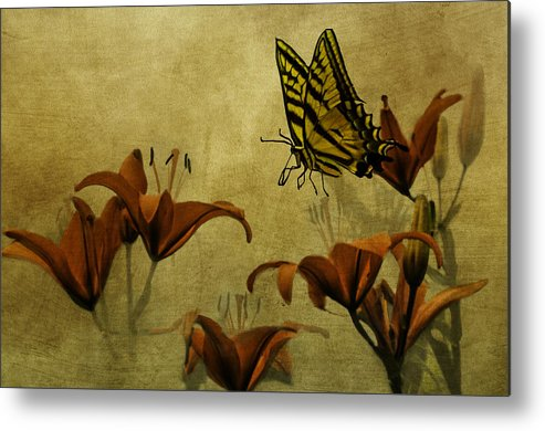 Lillies Metal Print featuring the photograph Spring Fever by Diane Schuster