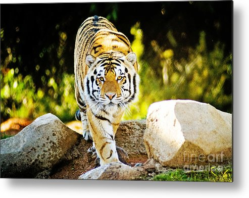 Nature Metal Print featuring the photograph Stalker by Scott Pellegrin