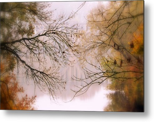 Tree Metal Print featuring the photograph The Meeting by Michelle Ayn Potter