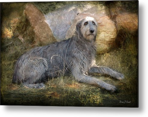 Dogs Metal Print featuring the photograph The Wolfhound by Fran J Scott