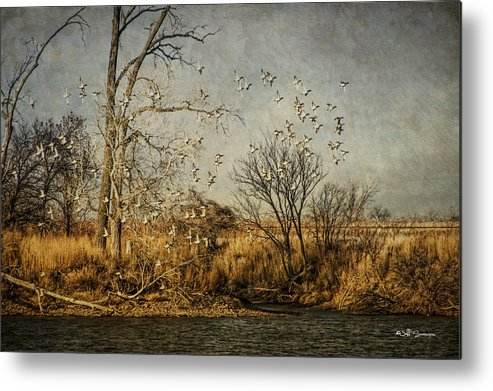 Ducks Metal Print featuring the photograph Up Up And Away by Jeff Swanson