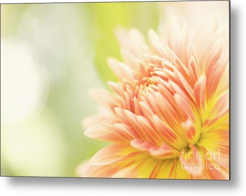 Dahlia Metal Print featuring the photograph When Summer Dreams by Beve Brown-Clark Photography