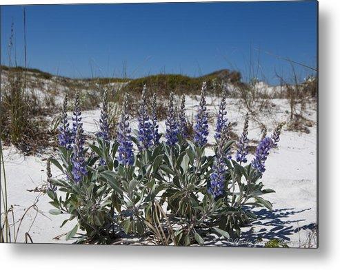 Beach Metal Print featuring the photograph Beach Flora by Charles Warren