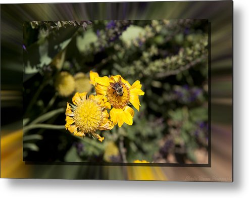 Flower Metal Print featuring the photograph Behave by Charles Warren