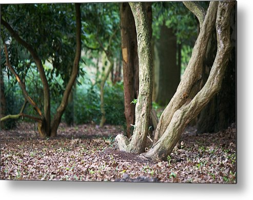 Forest Metal Print featuring the photograph Bizarre Trees by Angela Doelling AD DESIGN Photo and PhotoArt