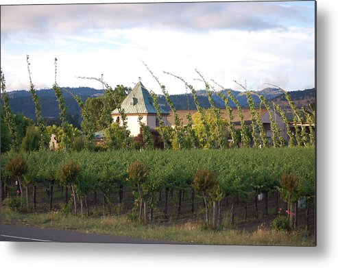 Blowing Grape Vines Vineyards Rustic House Winery Napa California Ca Wine Metal Print featuring the photograph Blowing Grape Vines by Holly Blunkall