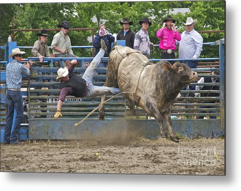 Photography Metal Print featuring the photograph Bull 1 - Rider 0 by Sean Griffin