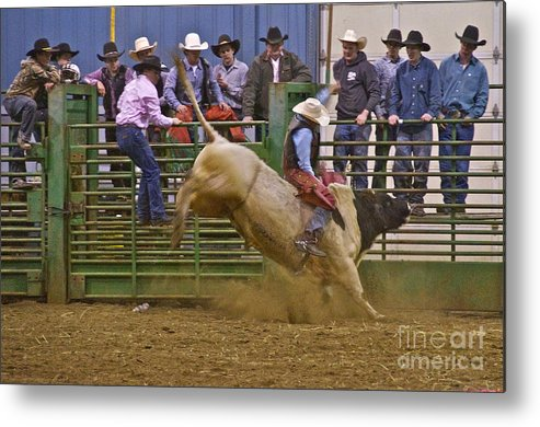 Photography Metal Print featuring the photograph Bull Rider 2 by Sean Griffin