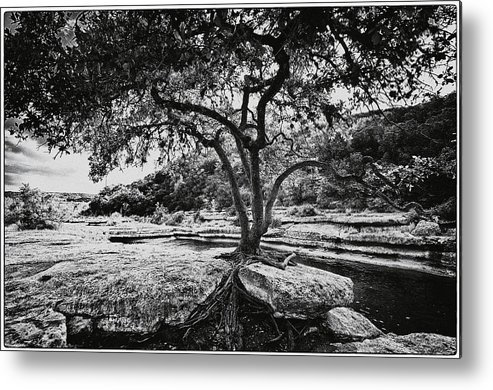 Still Life Metal Print featuring the photograph Grown Into The Rock by Lisa Spencer