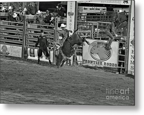 Bull Riding Metal Print featuring the photograph Hold On For 8 by Shawn Naranjo