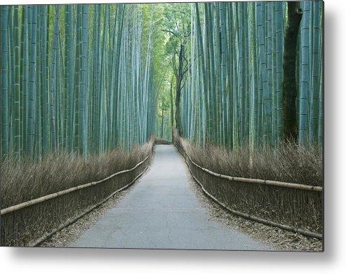 Photography Metal Print featuring the photograph Japan Kyoto Arashiyama Sagano Bamboo by Rob Tilley