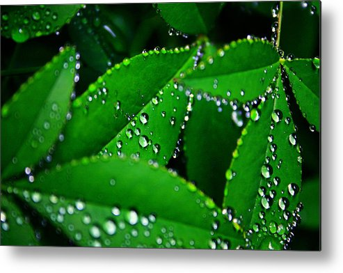Nature Metal Print featuring the photograph Rain Patterns by Toni Hopper
