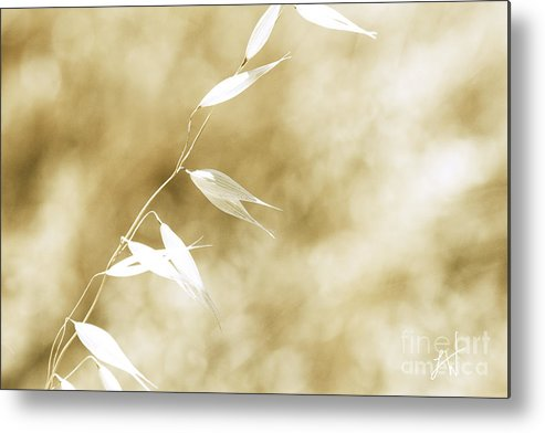 Summer Wheat Metal Print featuring the photograph Summer Grass by Artist and Photographer Laura Wrede