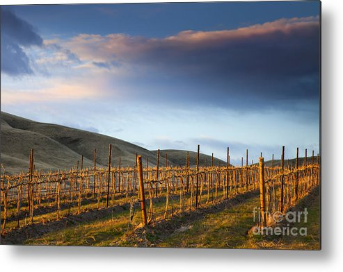 Vineyard Metal Print featuring the photograph Vineyard Storm by Mike Dawson