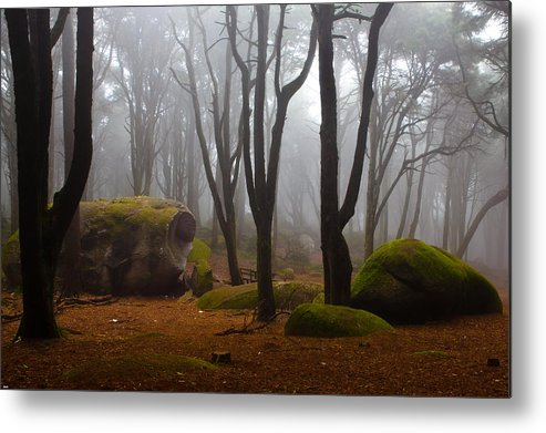Forest Metal Print featuring the photograph Wonderland by Jorge Maia