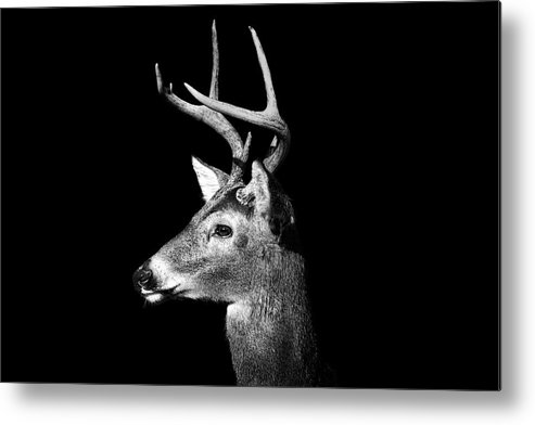 Horizontal Metal Print featuring the photograph Buck In Black And White by Malcolm MacGregor