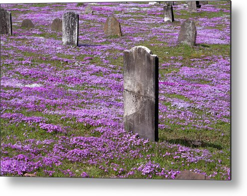 Tombstone Metal Print featuring the photograph Colonial Tombstones Amidst Graveyard Phlox by John Stephens