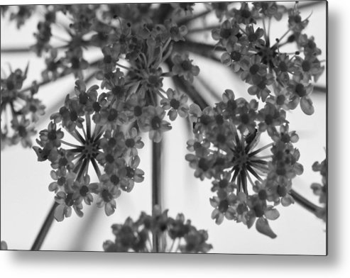 ryankellyphotography@gmail.com Metal Print featuring the photograph Fractal Flower Photoset 02 by Ryan Kelly