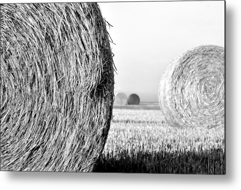In The Hay -black And White Metal Print by Dana Walton