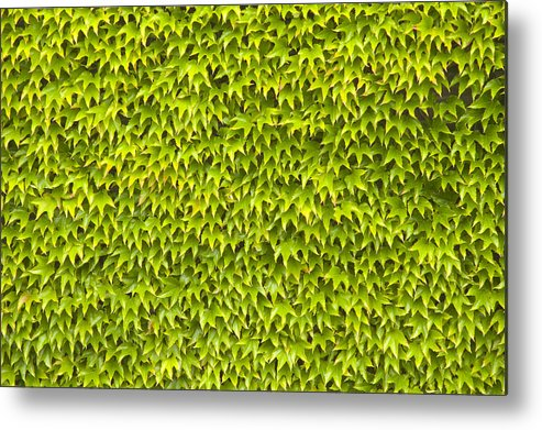 Abstract Metal Print featuring the photograph Ivy Wall by Andy Smy