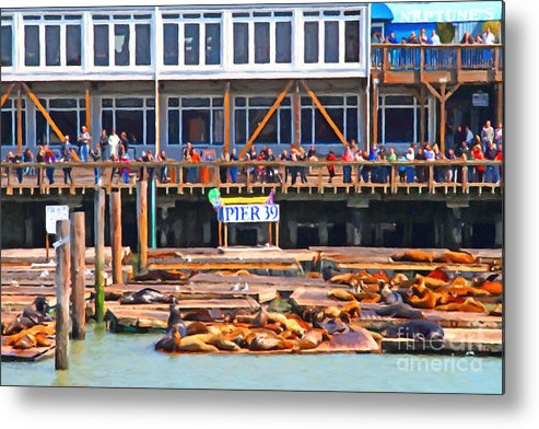 San Francisco Metal Print featuring the photograph San Francisco Pier 39 Sea Lions . 7d14272 by Wingsdomain Art and Photography