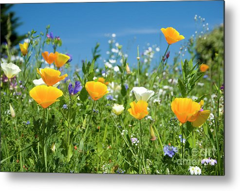 Summer Metal Print featuring the photograph Summer Flowers by Sophie De Roumanie