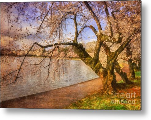 Trees Metal Print featuring the photograph The Cherry Blossom Festival by Lois Bryan