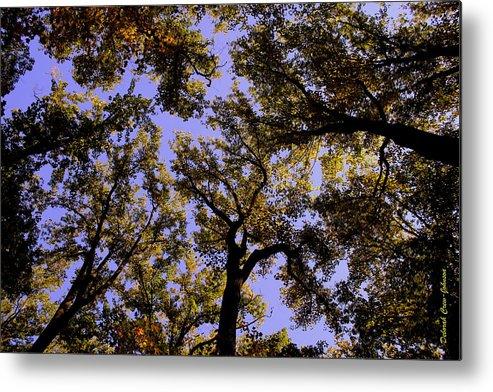 Trees Metal Print featuring the photograph Trees Conversing by Deborah Crew-Johnson