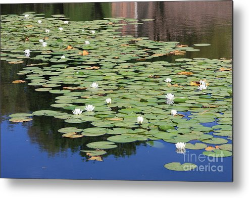 Water Metal Print featuring the photograph Water Lily Pond by Carol Groenen