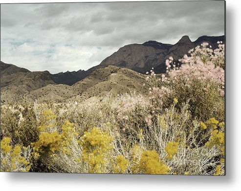 Sandia Mountains Metal Print featuring the photograph Wildflower Mountain by Andrea Hazel Ihlefeld