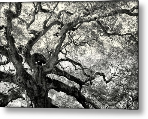 Abstract Trees Metal Print featuring the photograph Reaching For Heaven by Karen Wiles