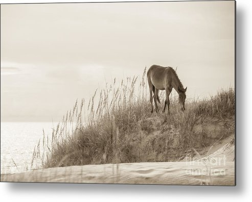 Horse Metal Print featuring the photograph Wild Horse On The Outer Banks by Diane Diederich