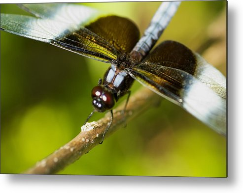 Macro Metal Print featuring the photograph Macro by Jack Zulli