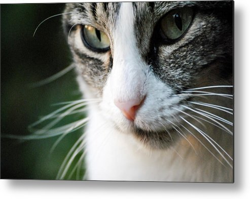 Horizontal Metal Print featuring the photograph Cat Portrait by Julia Williams