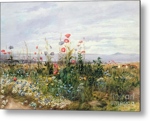 Meadow; Flowers; Irish; Wild; Landscape; Poppies Metal Print featuring the painting Wildflowers With A View Of Dublin Dunleary by A Nicholl
