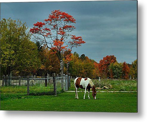 Fall Scenes Metal Print featuring the photograph The Pinto by Julie Dant