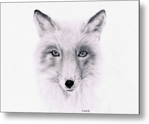 Fox Metal Print featuring the drawing Fox by Lucy D