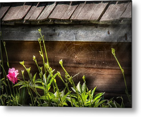 Suburbanscenes Metal Print featuring the photograph Insect - Spider - Charlottes Web by Mike Savad