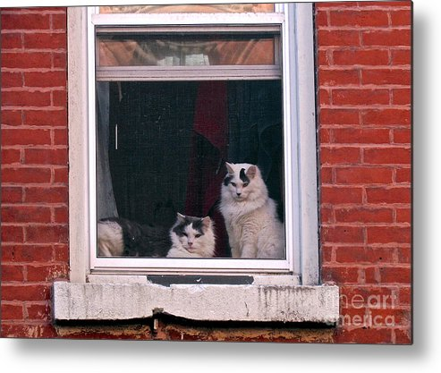 Cats Metal Print featuring the photograph Cats On A Sill by Randi Shenkman