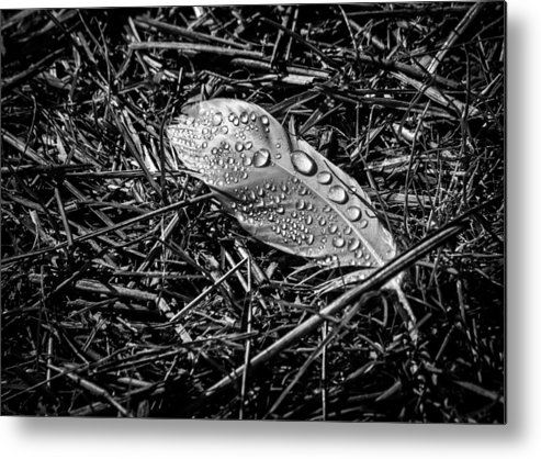 Feather Metal Print featuring the photograph Morning Dew by Bob Orsillo