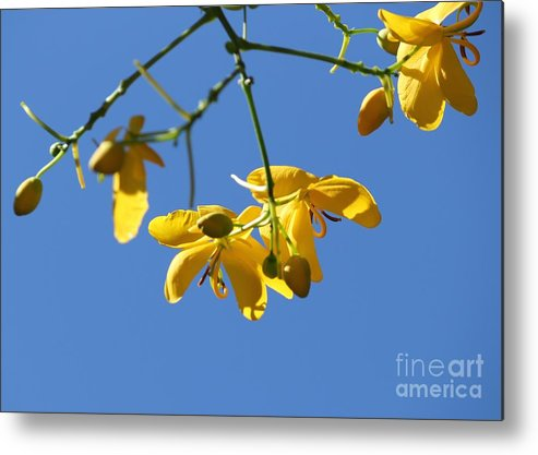 Cassia Metal Print featuring the photograph Yellow And Blue by Theresa Willingham