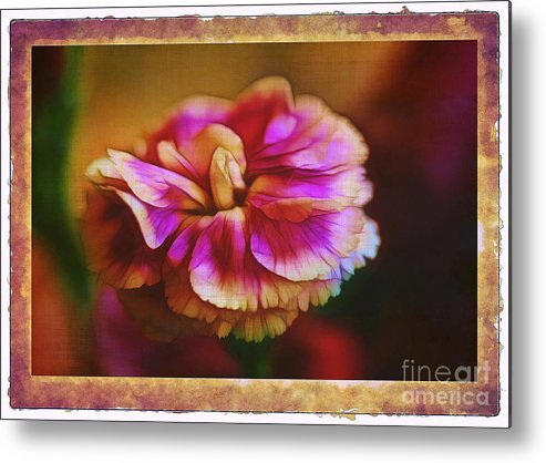 Carnation Metal Print featuring the photograph Yesterday by Judi Bagwell