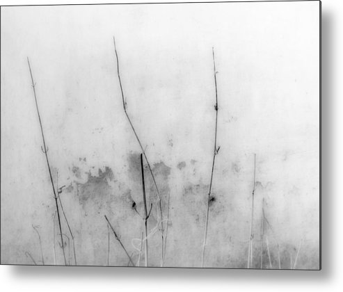 Gray Metal Print featuring the photograph Shades Of Grey by Prakash Ghai