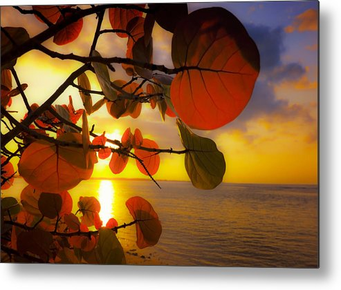 Beach Metal Print featuring the photograph Glowing Red II by Stephen Anderson