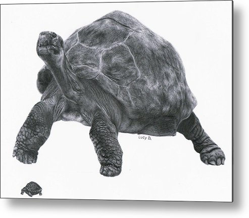 Giant Tortoise Metal Print featuring the drawing Giant Tortoise by Lucy D