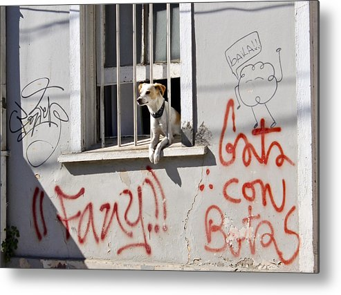 Dog Metal Print featuring the photograph How Much Is That Doggie In The Window? by Kurt Van Wagner