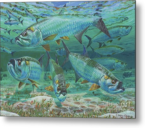 Tarpon Metal Print featuring the painting Tarpon Rolling In0025 by Carey Chen